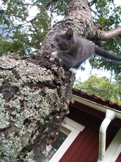 Trädklättring